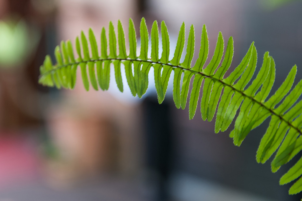 Closeup of green fern Homosexual Home garden Wedding Auckland Photographer Anais Chaine
