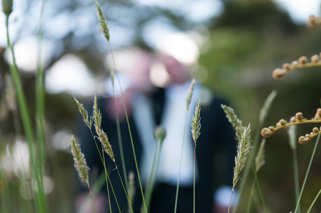 Sharp detail of blades of grass with married couple in the blurred background Homosexual Home garden Wedding Auckland Photographer Anais Chaine