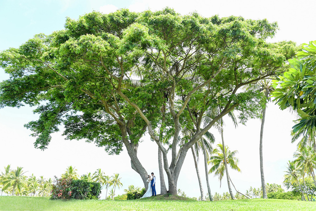 The bride and groom are standing by a giant tree at the golf course in Denerau, Nadi Fiji.