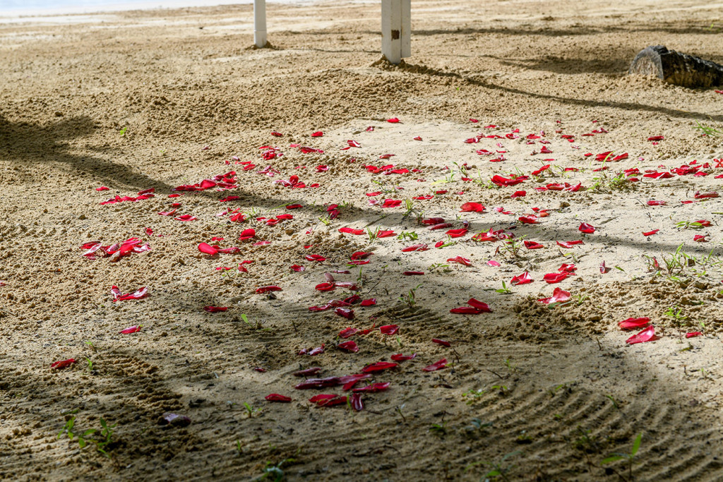 rose petals on white sand for the wedding ceremony, at Matangi island resort Fiji
