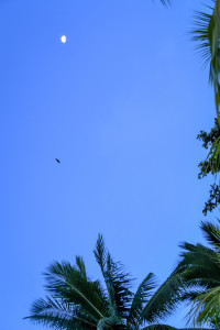 Blue night sky with bat and palm tree, Matangi Island resort, Fiji