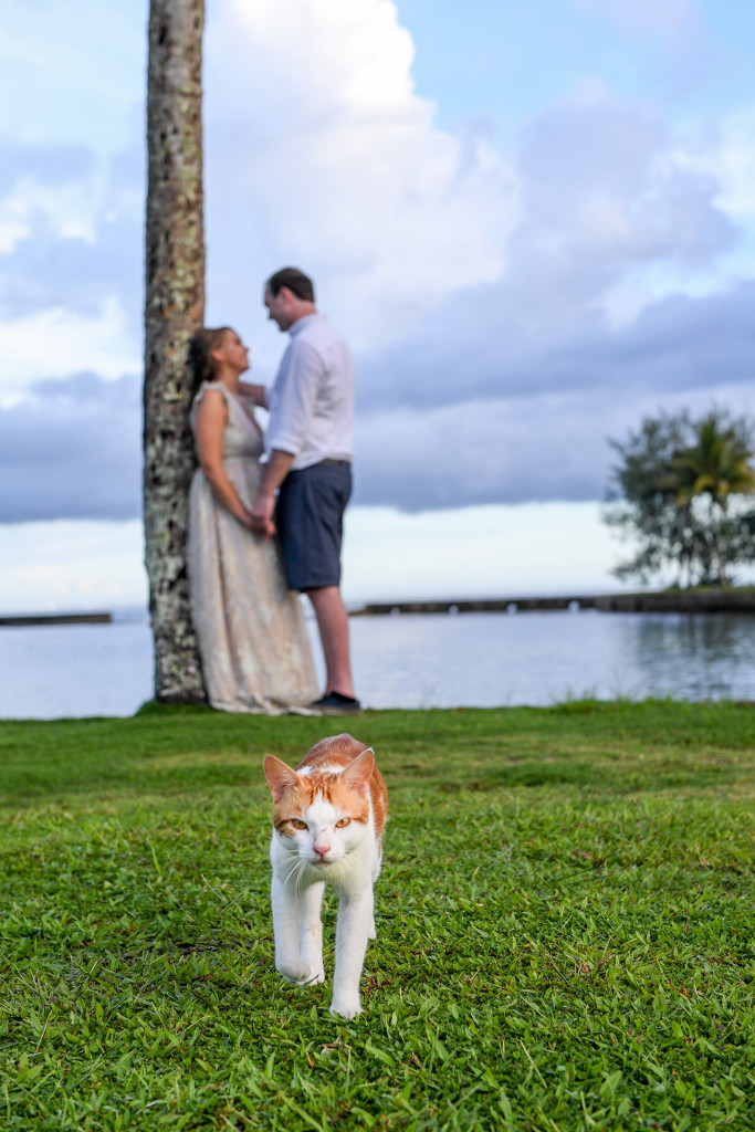 A ginger cat walks in front of the love-stricken couple