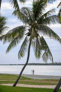 The newly married couple stand underneath a gigantic palm tree