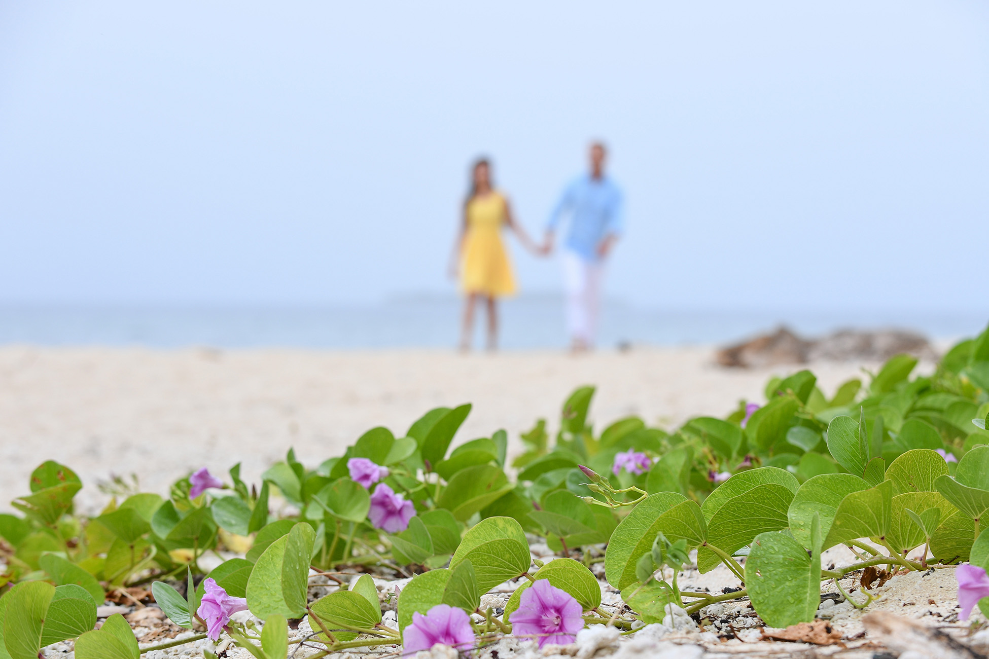 The beach morning glory flower in the foreground with the engaged couple in the background