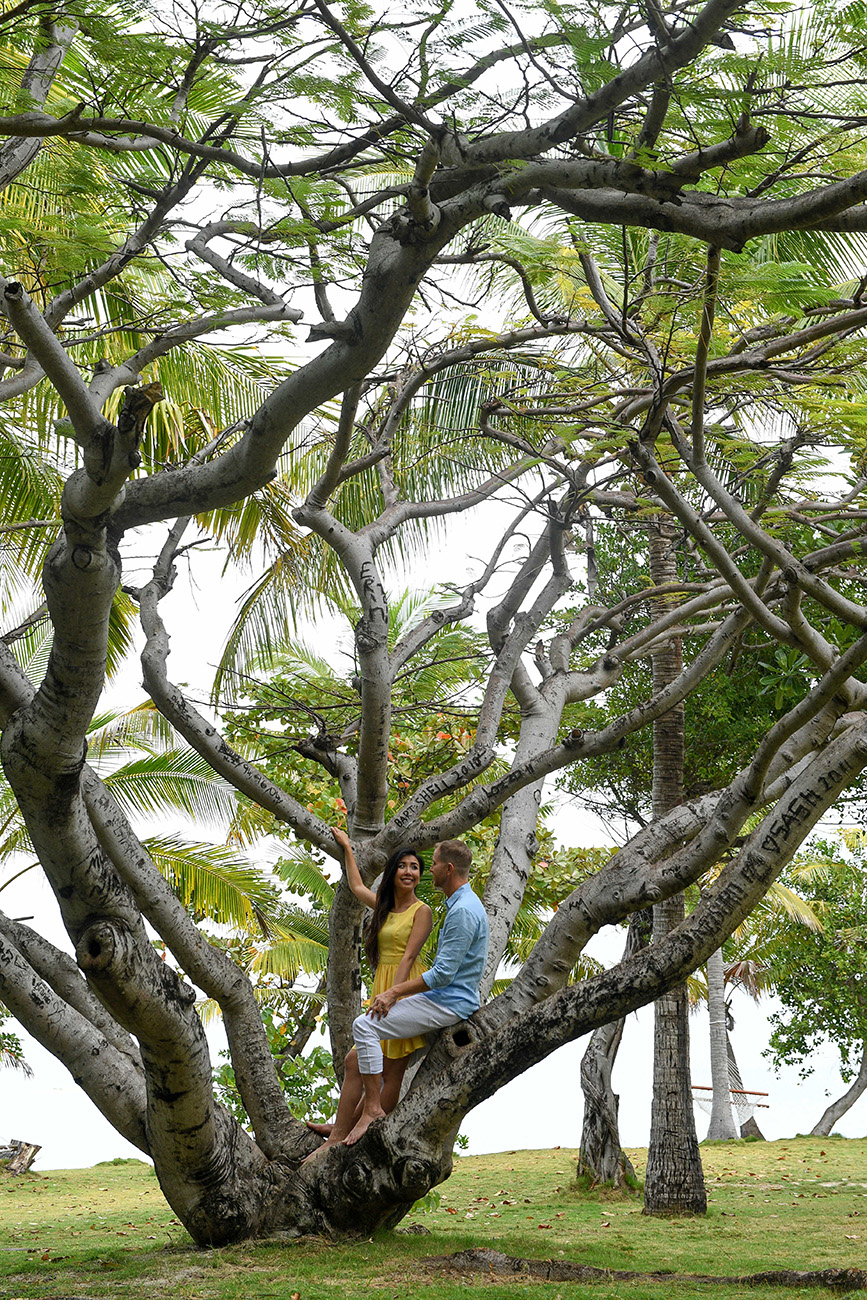 The newly engaged couple poses on a lover's tree in Mamanunca Fiji