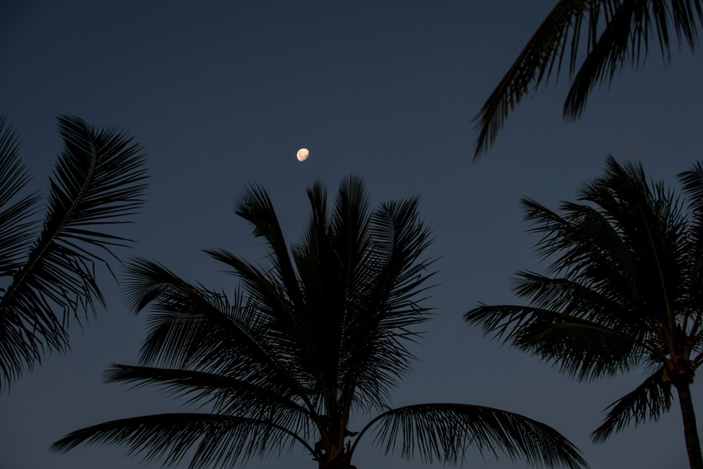 A gibbous moon over palm trees at night