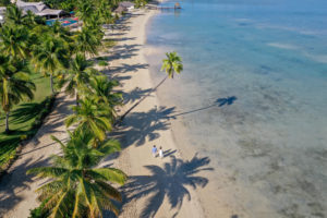 Stunning drone shot of the couple walking under towering Fiji Palm trees