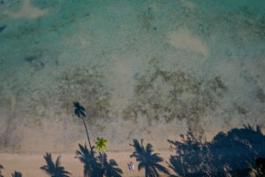 A drone shot of the loving couple under towering Fiji palms